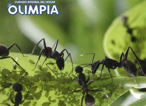 Eliminar hormigas de la cocina trendy descubre qu puntos - Eliminar hormigas cocina ...