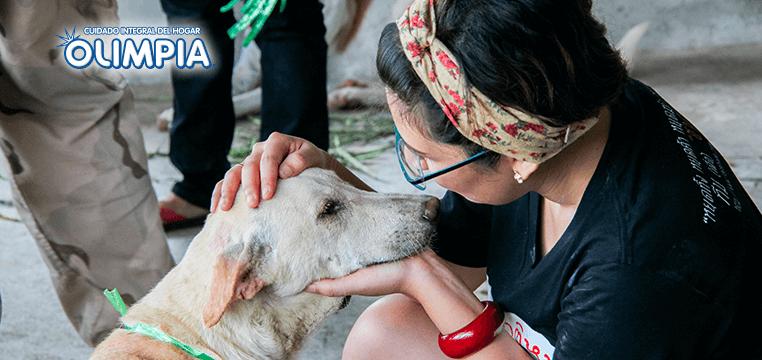 Qué hacer antes y después de adoptar una mascota - Olimpia