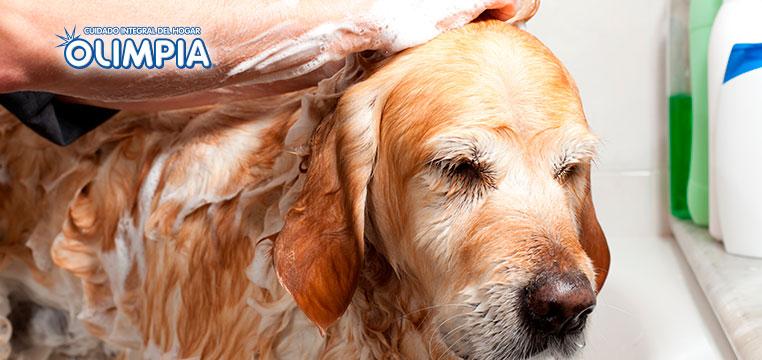 ¡El aseo de tus mascotas también importa! - Olimpia