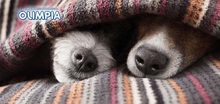 Consejos Prácticos: ¿ Mi perro con resfriado ? - Olimpia