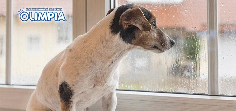 No solo de la lluvia debes cuidar a tu mascota en el invierno - Olimpia