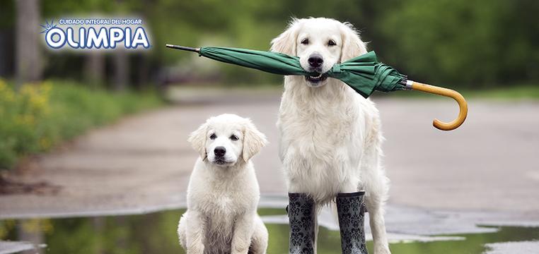 Consejos para pasear a tu perro en la lluvia