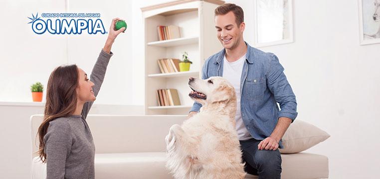 Tu mascota dentro de casa y todo en su lugar