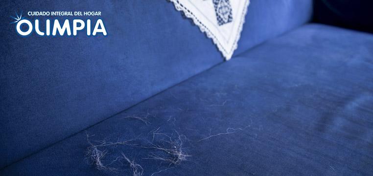 Elimina los pelos de tu mascota de tu hogar
