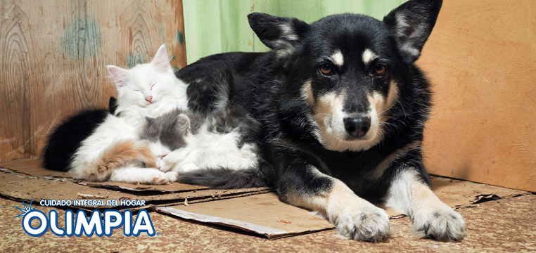 Cómo se rehabilita a un perro abandonado